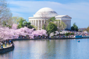 Satellite Sheldon: An Update for the Northeast; It Doesn't Look Good for the Cherry Blossoms