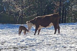 Alabama Newscenter Readers Share Snow Photos