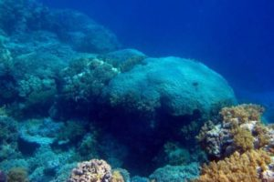 Corals In The Red Sea Provide Insight On The South Asian Summer Monsoon Activity