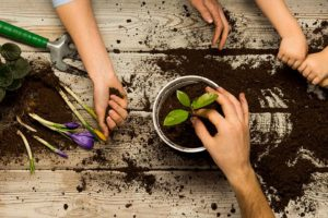 Cultivate A Green Thumb And Reap Family Rewards For A Lifetime