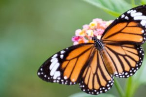 How To Attract Butterflies And Birds To Your Yard