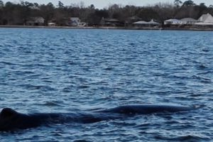 Alabama NewsCenter: Fisherman Recounts Discovering Whale in Alabama's Mobile Bay