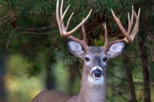 Alabama NewsCenter: Game Check Phone System Back for Hunters in Alabama