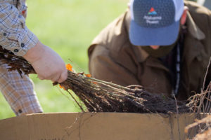 Alabama Newscenter — Arbor Week: Tree Giveaways in Communities Throughout the State