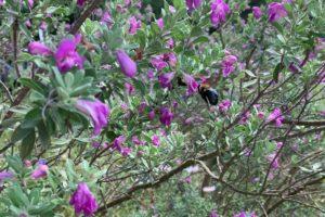 Alabama Newscenter — Loving Alabama's Summer's Harvest? Thank A Pollinator