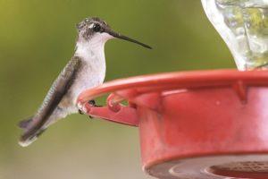 Alabama NewsCenter — Interest in Backyard Birdwatching Takes Wing in Alabama