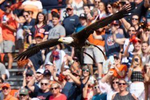 Alabama NewsCenter — Auburn University Retiring Bald Eagle Spirit From Pregame Flights This Fall